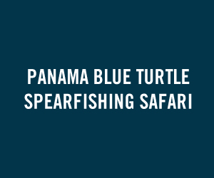 Panama Blue Turtle Spearfishing Safari