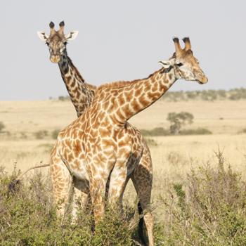 Tupo African Safaris