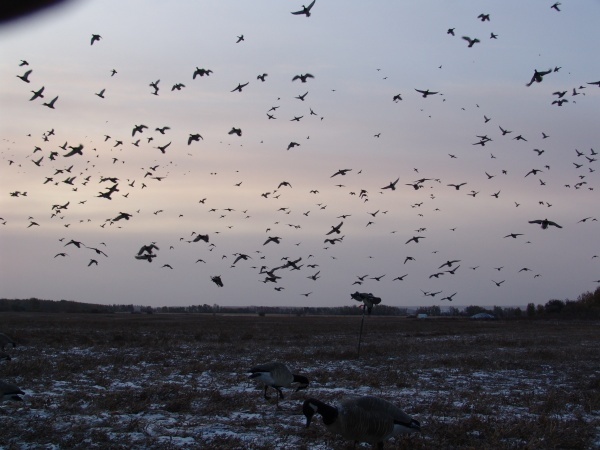 Blue Sky Outfitters: Waterfowl
