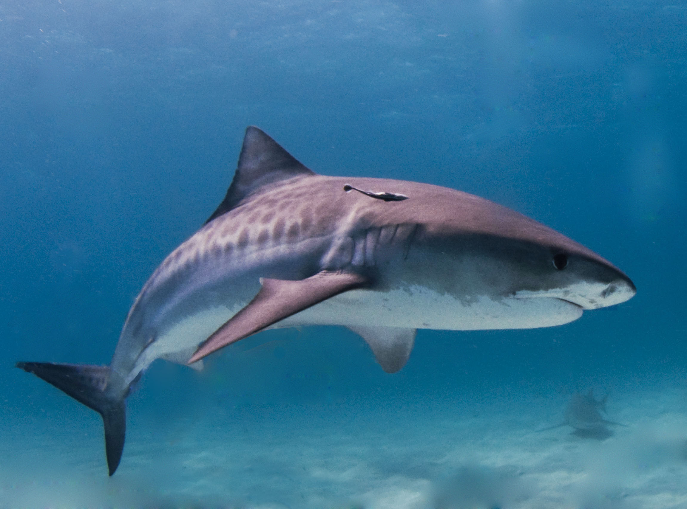 Shark Bites Teen Off Hawaii