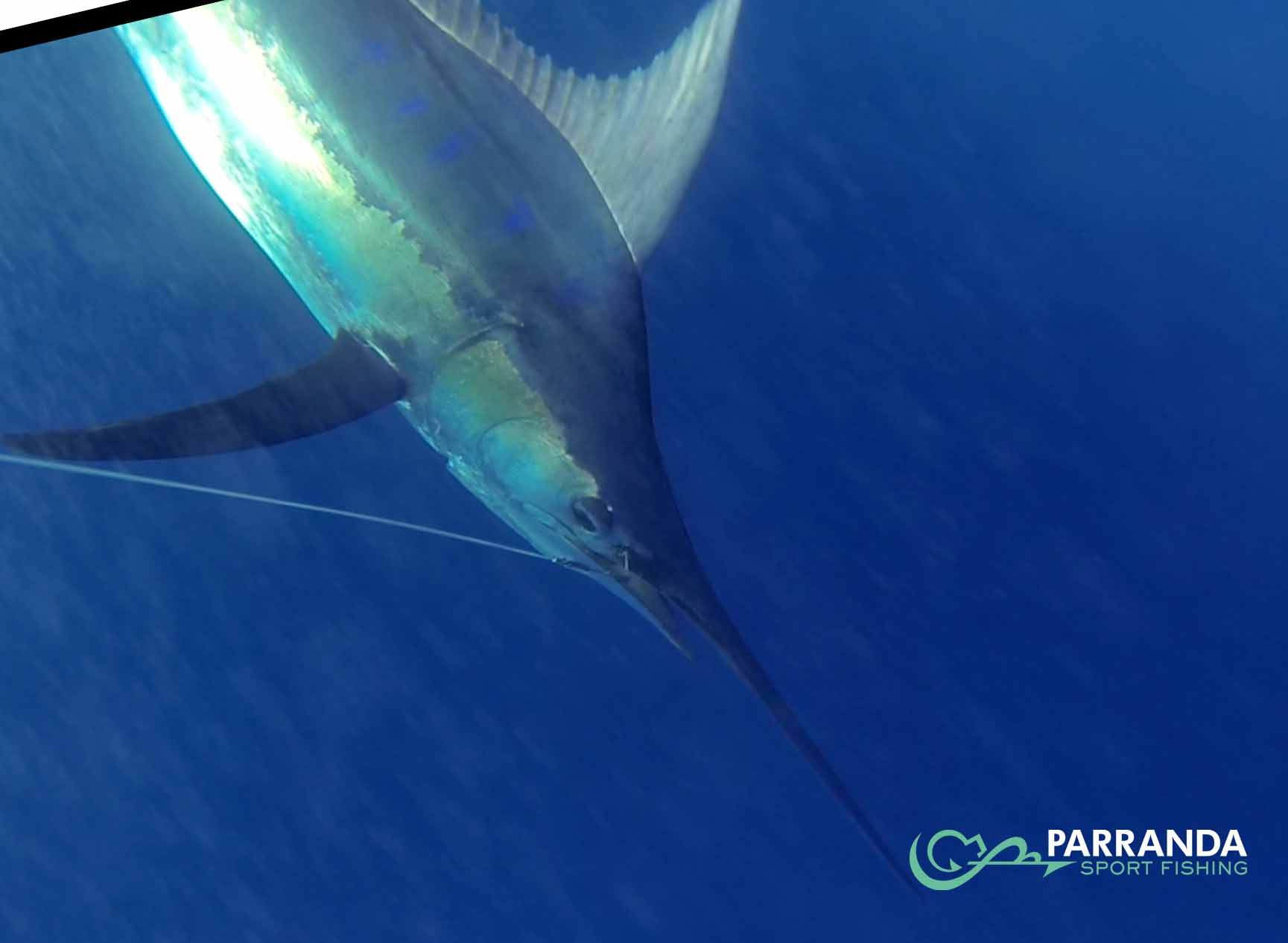 Parranda Sport Fishing